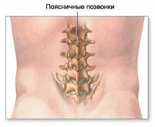 Anatomy of the spine, the anatomy of the spinal cord