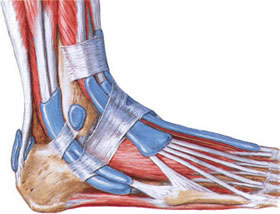 Near the insertion of the Achilles tendon is a bursa, porpzhaemaya at achillodynia.