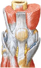 ...связок коленного сустава, лечение травмы и растяжения связок...