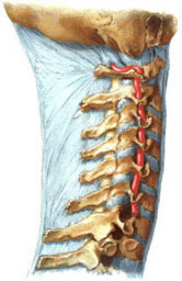 Neck pain, sore neck and head is not rotated, muscle aches, arm and back muscles, causes pain in the neck and head, causes pain in the arm, osteochondrosis of the cervical spine, pain in the arm, neck pain, pain between the shoulder blades, the weakness in the hand, causes unsteadiness in walking, dizziness, causes of tinnitus, vertebrobasilar insufficiency, damage to the intervertebral disc, neck pain, neck chill, hypothermia neck, shot in the neck, neck pain, discomfort in the neck, cervical osteochondrosis, cervical ostehandroz causes, treatment of neck, treatment of the cervical spine, treatment of cervical degenerative disc disease, treatment of neck pain, treatment of cervical lumbago, treatment of cervical spine, treatment of the cervical spine, treatment of cervical spinal osteochondrosis in Moscow, the treatment of cervical salt deposits, salt deposits in the neck, the accumulation of salts in the cervical, turn my head hurts, it hurts to turn his neck, tilting your head hurts, it hurts to tilt the neck, twist your neck hurts, it hurts to turn the head and neck, backache in your hand, crack in the neck, the crunch in the neck, non-surgical reduction of vertebral disc herniation, as well as where people are treated as and where to treat the symptoms of muscle pain in the neck, a symptom of disease, a symptom of the disease, symptoms of inflammation, symptoms, symptoms of disease, symptoms, syndrome, disease, symptoms of disease