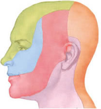 Places of pain in trigeminal neuralgia on the face.