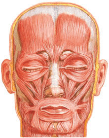 Paresis or paralysis of facial muscles in facial nerve neuropathy (neuritis) arises on the affected side of the nerve.