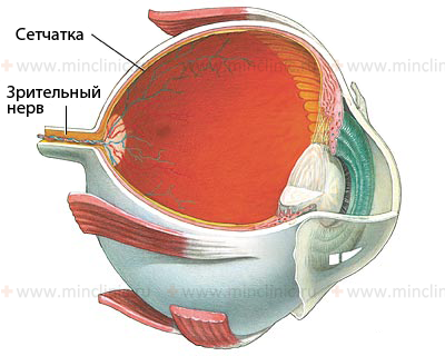 Visual pathways and its disturbances, Visual pathway, Functional diagnosis of the visual pathway's anterior segment lesions , diagnosis and treatment in Moscow, symptoms