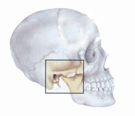 Location of the temporomandibular joint (TMJ) on the skull.
