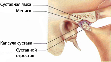 Anatomy of the temporomandibular joint (TMJ).