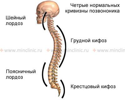 КМН — Болезнь Бехтерева, анкилозирующий спондилит, спондилоартрит ...