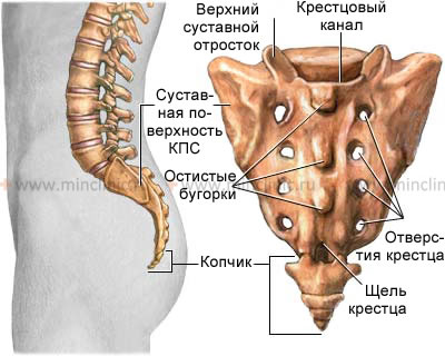КМН — Боли в позвоночнике (нижняя часть спины, поясница), местная ...