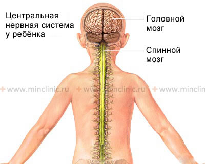 Spinal cord diseases, treatment of Spinal cord diseases, diagnosis of Spinal cord diseases in Moscow
